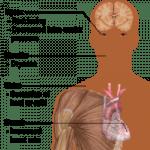 Efectos corporales del cannabis